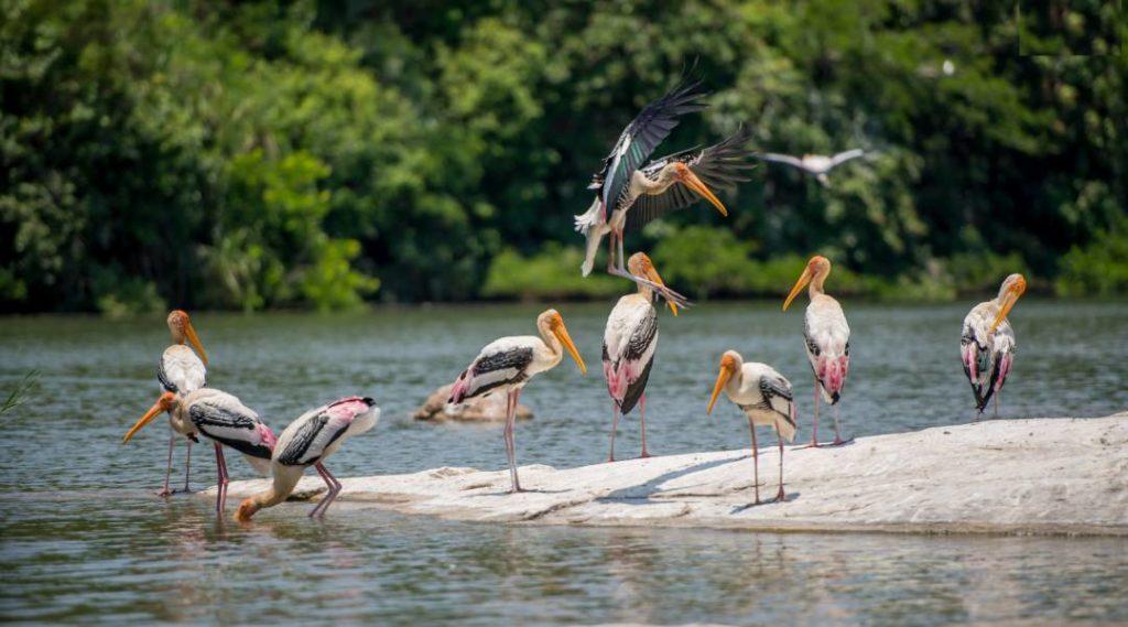 Ranganathittu Bird Sanctuary Mysore