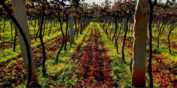 Vineyard tour - Bangalore