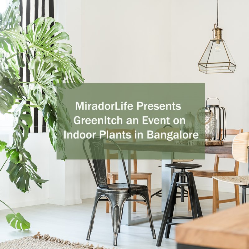 Green Itch - An Event on Indoor Plants